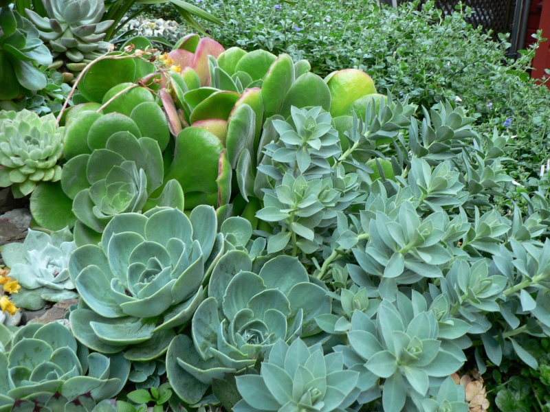 Succulents thriving in June