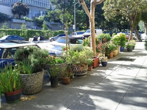 Rows of pots front the homes' sidewalks in Duboce Triangle