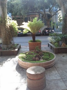 Gorgeous potted tree fern, with a place to sit and enjoy it!
