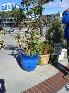 Beautiful pot at Cafe Flore