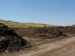 Row upon row of compost.