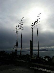 agave spikin'