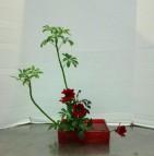 Midterm arrangement #2 is Basic Upright Moribana, with Schefflera and Dahlias.