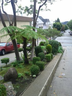 The topiary gumdrops in the Liberty St median strip at Church St.