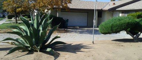 Minimalists? Nice agave.