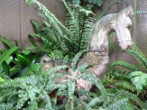 Again, sorry for the blur. Our wooden horse among the ferns.
