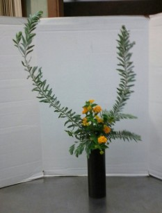 Slanting Nageire, Variation #3. Acacia covenyi with golden lantana.