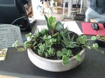 A fun little arrangement I did at Flora Grubb Gardens. The customer wanted something easy-care for moderate light. These Peperomia and Haworthia will do the trick nicely.