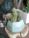 Had fun creating a cluster of golden-spined cacti for sale at Flora Grubb Gardens.