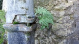Today's obsession was ferns growing on things. Here's one sprouting from a joint in a pipe.