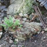 Fern in a piece of broken brick wall.