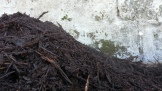 The grey of the concrete wall masked the masses of steam coming off the compost. Intense heat!