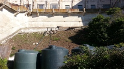 Water tanks at the back of the West Lawn, where the slope above has already been cleared. The tanks catch overflow from the historic basins along the wall at the top of the slope, which was originally built to catch water from the showers for use on the lawn. Grey water recycling a hundred years ago!