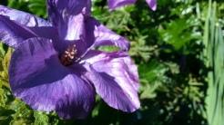 More flowering beauty in the Prisoners' Garden.