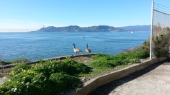 A couple of Canadian geese, reminding us we're on the Pacific Flyway.