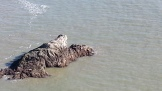 Harbor Seals enjoying the sun on the rocks below.