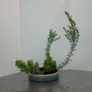 Slanting Moribana Variation #5 for my Ikebana class. Leucadendron 'Safari Goldstrike' and Acacia covenyi.