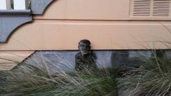 Cute little sculpture in a driveway garden on 22nd St.