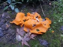 Full shot of that fungus.