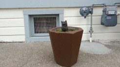 Something different for a front garden on Palou. :)
