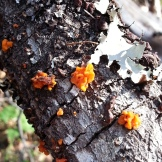 Beautiful fungi and lichens.