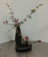 "Ikebana lesson called ""Variation #8, Nageire and Moribana."" Pink kangaroo paw with Melaleuca incana."
