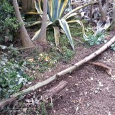 Corwin Mini Park's fallen agave flower spikes being used for garden bed borders.