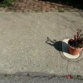 An offering?
