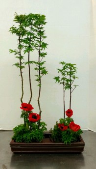 "My ikebana arrangement for ""Vertical Freestyle."" Japanese maples and anemones."