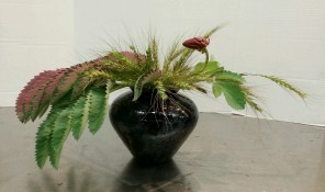 """Horizontal Freestyle"" Ikebana I made. Melianthus major and grass seedheads."