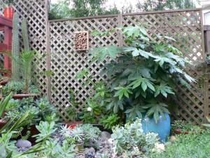 A corner of our garden.