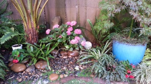 'George Morneau' is just to the right front of the hydrangea. Small, for now.