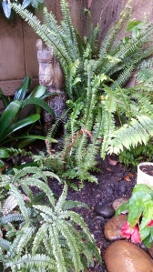 Nobody puts horsie in the corner. But I did. :) The Blechnum brasiliense is the rosy fern at her feet.