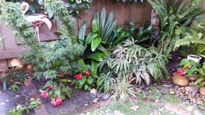 The pot-like 'Goshiki Kotohime' Japanese maple, with maidenhair ferns, begonias, clivia, sedge...