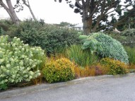 Gorgeous borders of shrubs depend on a lack of boxwood.