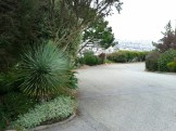 Seriously. Look at that yucca! A globe, without a boxwood in sight.