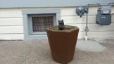Concrete cat in a concrete planter in a concrete yard? That's a Stray Angela.