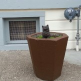 Concrete cat in a concrete planter in a concrete yard? That's a Stray Angela.