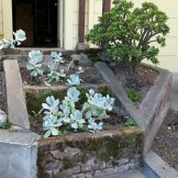 Interesting overhaul. Steps turning into a planter.