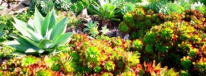 Succulents on the west side of the island.