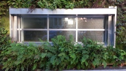 Shaded ferns and oxalis at ground level.
