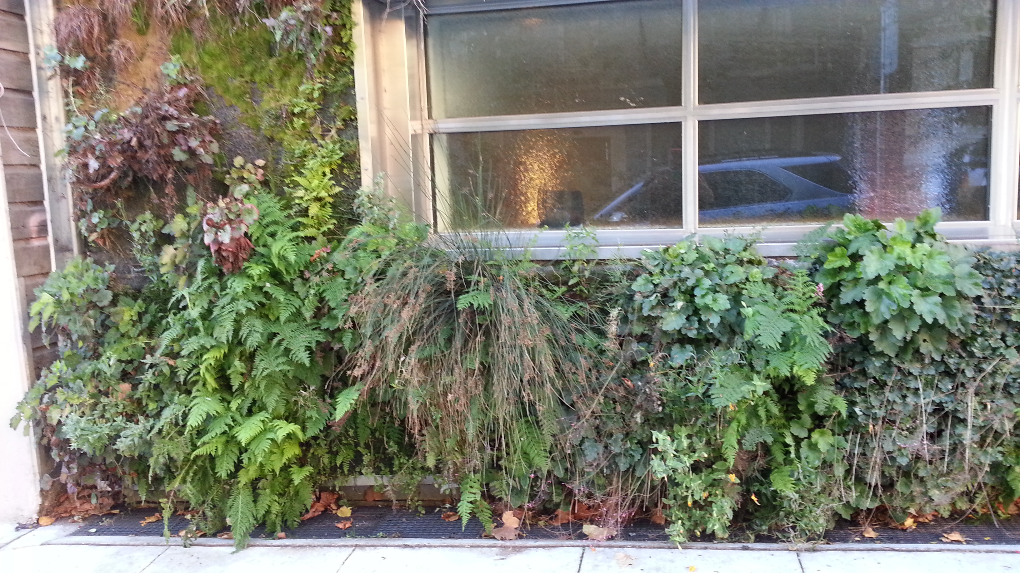 Urban wall garden far out flora - Seasonal Browns And Greens Thanks To Seeds And Semi Dormancy The Rest