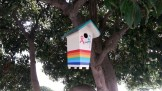 Gay birds, spreading AIDS awareness. Collingwood St.