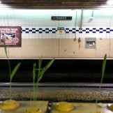 This surprised me! In Forest Hill Station, literally a hundred feet or more underground with no natural light, and this grass is sprouting in the cracks along the platform's edge.