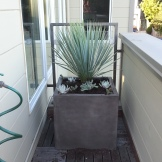 After: Side deck with Yucca rostrata and succulents.