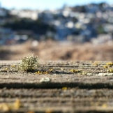 A tiny lichen on the split-rail fence at Kite Hill.