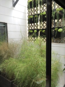 The Muhly grass, softening the view of the wall under the pockets.