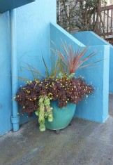 On 28th St, this stunningly-perfect color palette peeks out from next to a stair case, above Castro St.