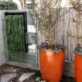 A step back, with some of the potted Azara trees. The garden is only two pots wider than the view here, and I'm standing against the door of the unit.