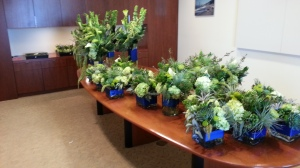 A herd of arrangements, in the room they had set aside for me to stage them and fluff them after their car ride.